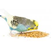 Мелкие попугаи