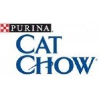 Kat-Chow.jpg